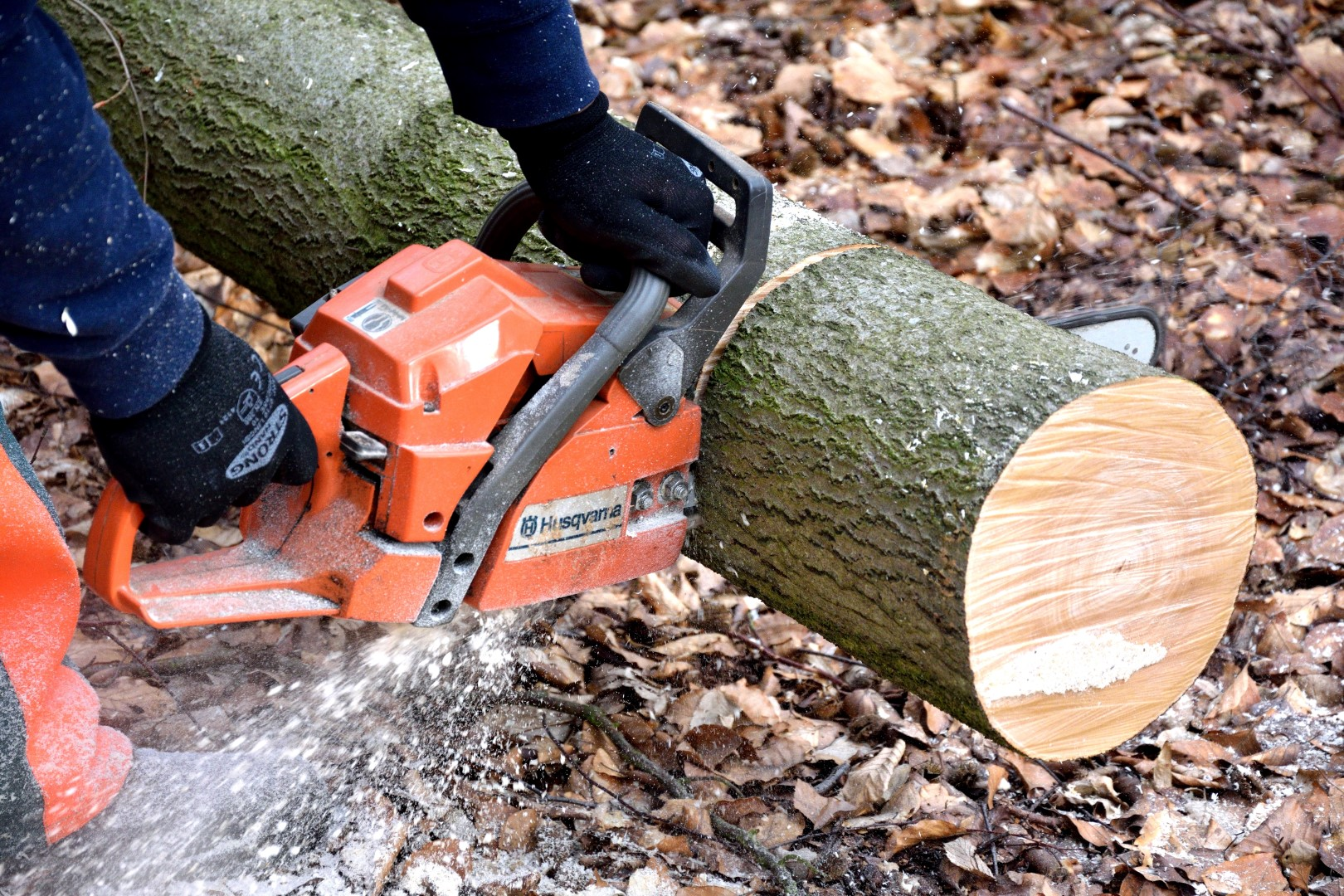 Canva - Cutting Wood, Lumberjack, Chainsaw, Woodworks